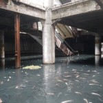 Exotic Fish Take Over Abandoned Shopping Mall